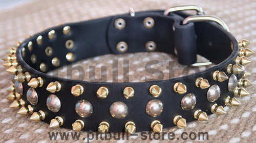 Three Rows with brass Leather Spikes and Studded Dog Collar