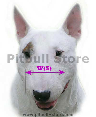 bull terrier breed sount size
