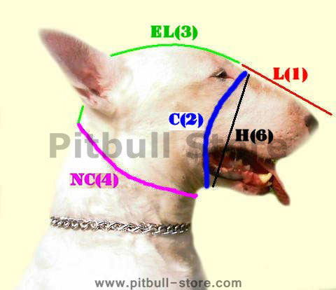Leather dog muzzle for bull terrier