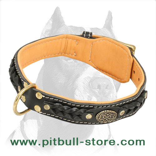 Beautiful Nappa Padded Hand Made Leather Pitbull Dog Collar - Click Image to Close