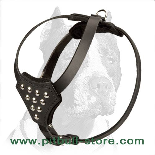 Full Grain Natural Leather Pitbull Puppy Harness