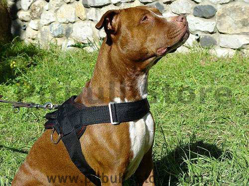 pulling nylon dog harness for Pitbull click here!!