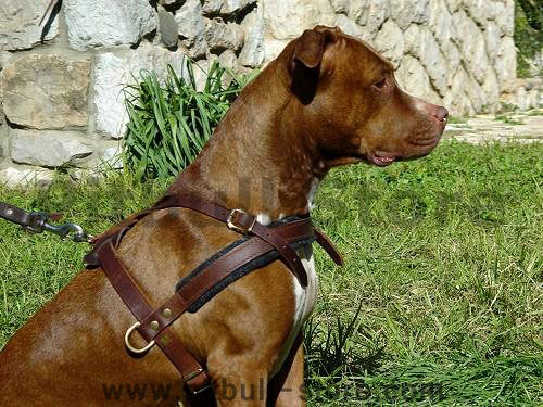 Nylon Dog Harness With Handle And 3 D Rings For Leshes Small Harness also Recycled Dog Harness likewise Running Sled Harness further Enhanced Strength Tru Fit Dog Car Harness furthermore Pitbull Wallpapers Hd Pictures. on weighted dog harness