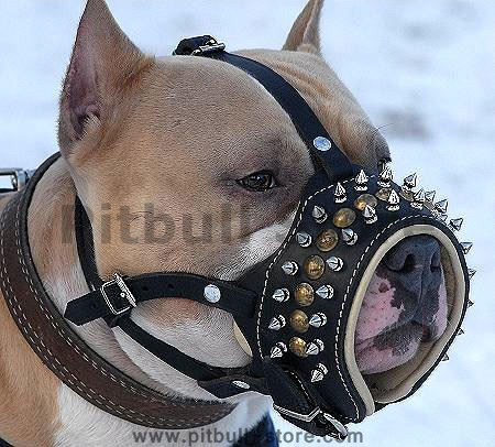 Pitbull mix dog harnesses, Pitbull mix dog muzzles,Pitbull mix dog collars and more..
