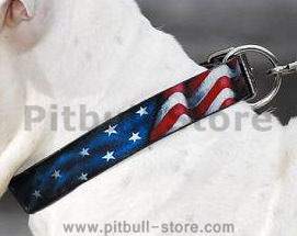usa leather dog collar for pitbull