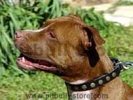 Special Pitbull Dog Leather Collar With Brass Circles