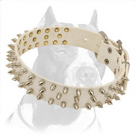 Reliable Leather Pitbull Dog Collar in White with Spikes