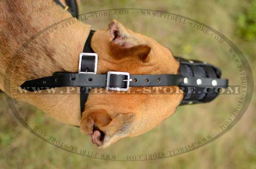 Easy adjustable leather muzzle for Pitbull