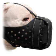Perfect looking leather muzzle