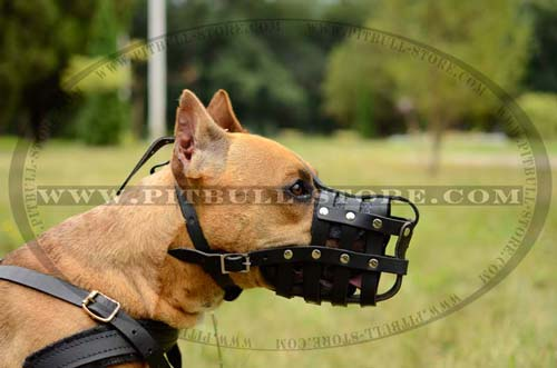 Perfectly ventilated Pitbull leather muzzle