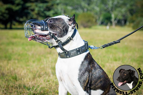 Pitbull dog muzzle allows drinking, barking, panting