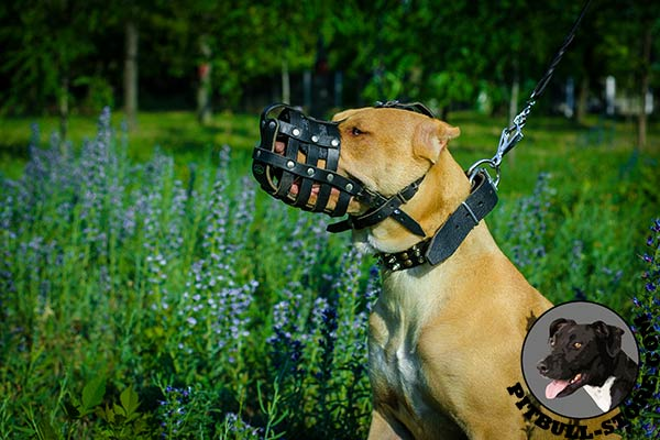 Top quality leather Pitbull muzzle