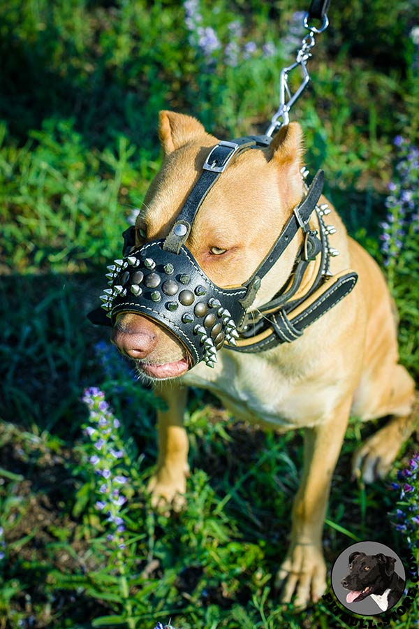 Comfortable nappa padded leather Pitbull muzzle