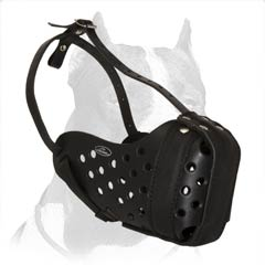 Pitbull leather muzzle with steel bar