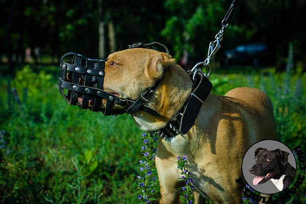 Leather Pitbull muzzle for off leash training