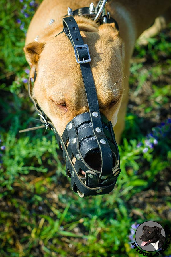 Super quality natural leather muzzle for Pitbull