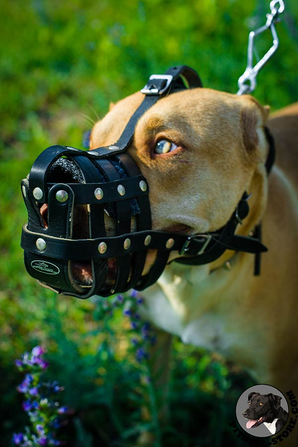 Strong leather Pitbull muzzle for safe walking