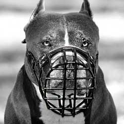 Good looking basket-like muzzle