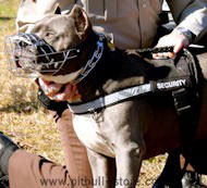 Police/Sherif Dog Harness for American Pit Bull Terrier-SAR
