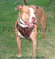 Pit bull harness,leather dog harness for Pit bull