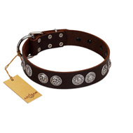 """High and Mighty"" FDT Artisan Classy Brown Leather Pitbull Collar with Embellished Brooches"