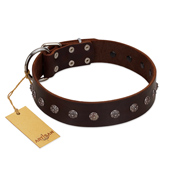 """Graceful Classic"" Mod FDT Artisan Brown Leather Pitbull Collar"