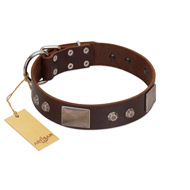 """Stone Stars"" Stylish Handmade FDT Artisan Brown Leather Pitbull Collar"