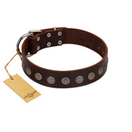 """Starry-Eyed"" Best Quality FDT Artisan Brown Designer Leather Pitbull Collar with Small Plates"