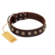 """Gape Buster"" FDT Artisan Brown Leather Pitbull Collar with One Row of Studs"