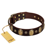 """Bronze Idol"" FDT Artisan Brown Leather Pitbull Collar with Eye-catching Ovals and Small Studs"