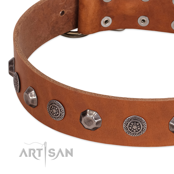 Stunning full grain leather collar for your four-legged friend stylish walks