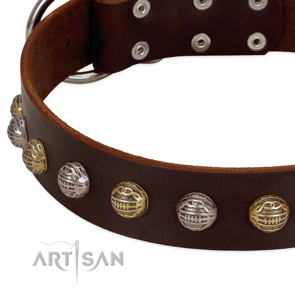 Genuine leather dog collar with rust resistant traditional buckle and studs