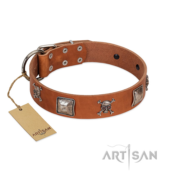 Trendy dog collar crafted for your beautiful pet