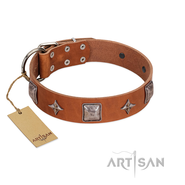 Quality full grain leather dog collar with embellishments for stylish walking