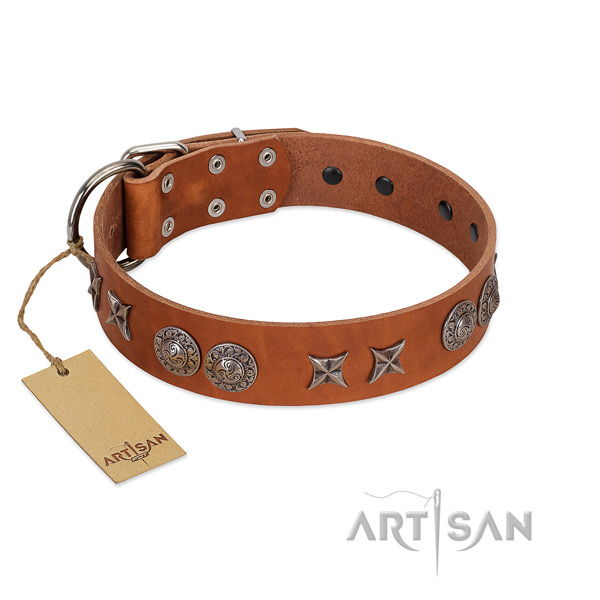 Genuine leather collar with extraordinary studs for your four-legged friend