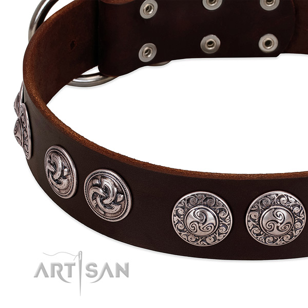Stunning full grain leather collar for your dog daily walking