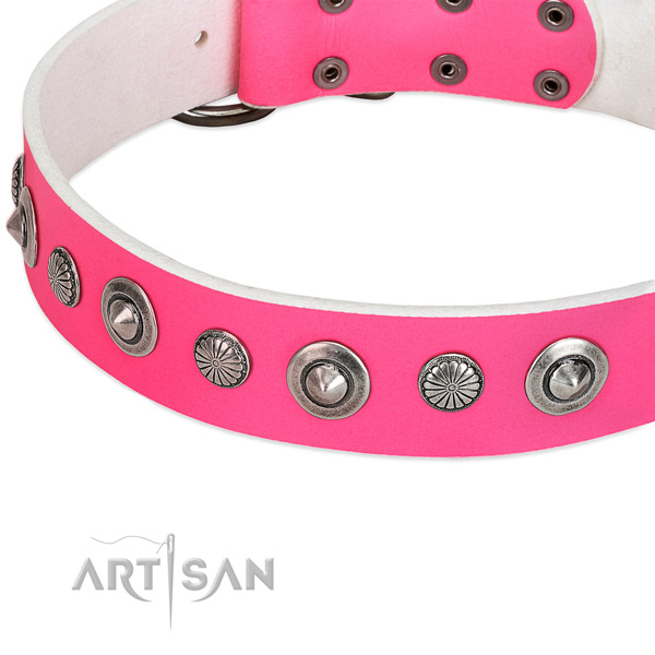 Natural leather collar with corrosion proof fittings for your impressive dog
