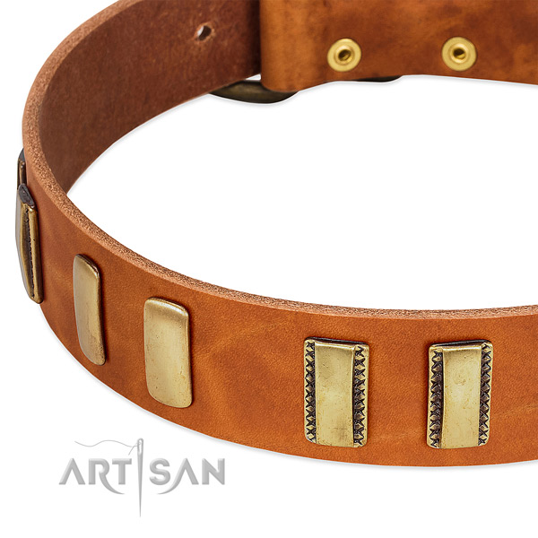 Top rate full grain leather dog collar with embellishments for fancy walking