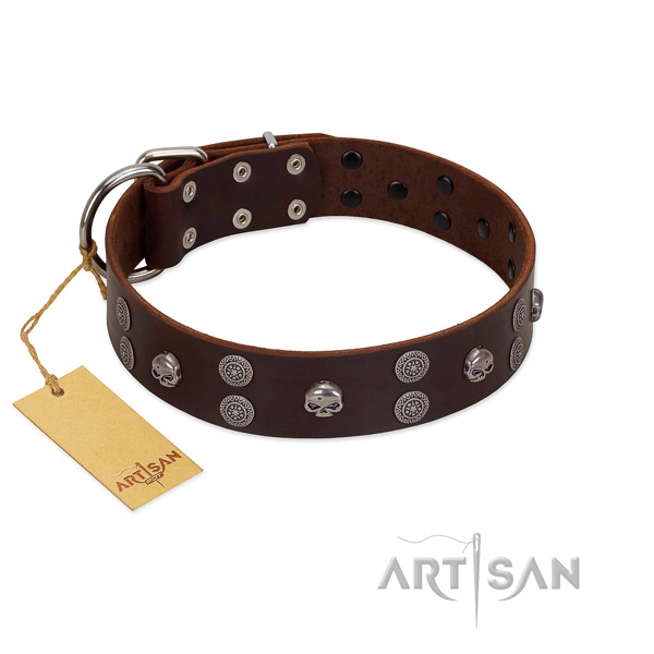 Everyday walking embellished genuine leather collar for your four-legged friend