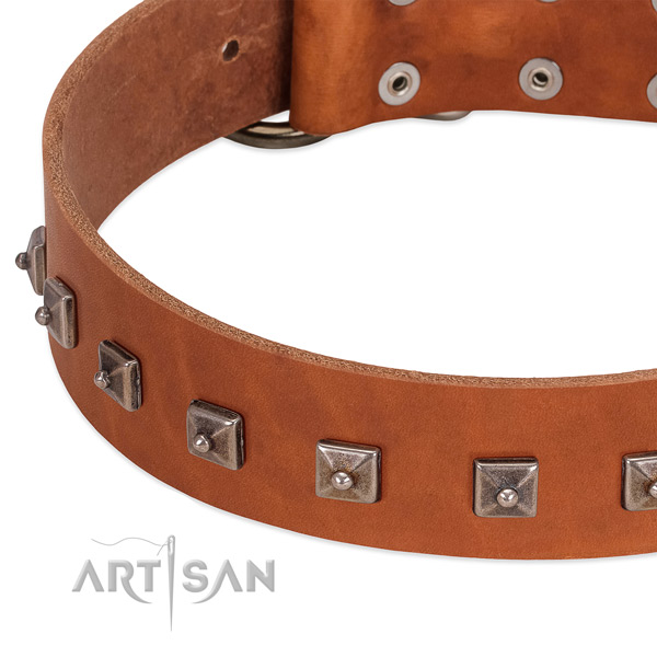 Top notch full grain leather dog collar with impressive adornments