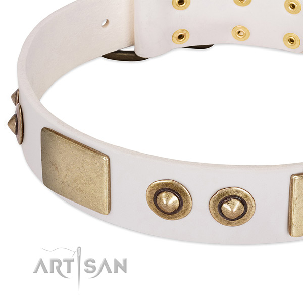 Corrosion proof studs on leather dog collar for your dog