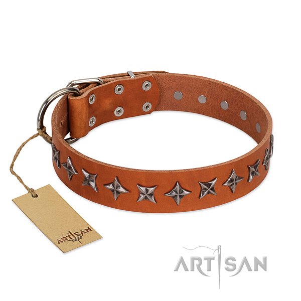 Daily walking dog collar of top notch leather with adornments