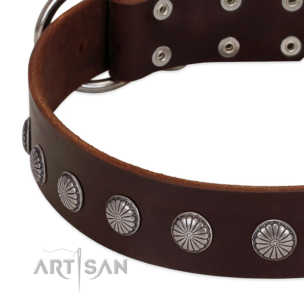 Soft full grain natural leather dog collar with studs for stylish walking
