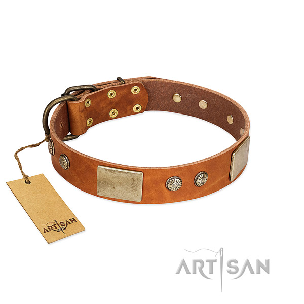 Adjustable full grain leather dog collar for stylish walking your canine