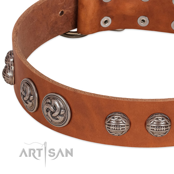 Corrosion proof fittings on full grain natural leather collar for fancy walking your doggie