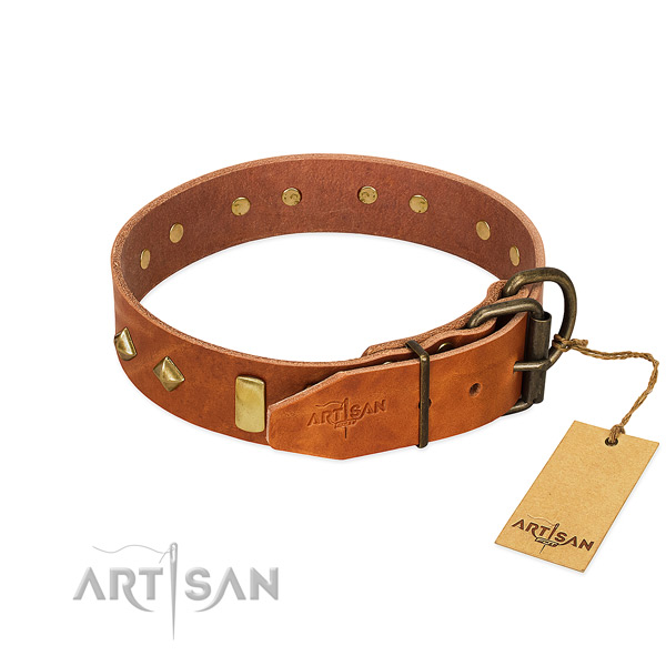 Everyday use leather dog collar with stylish studs