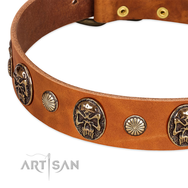 Corrosion proof traditional buckle on genuine leather dog collar for your canine