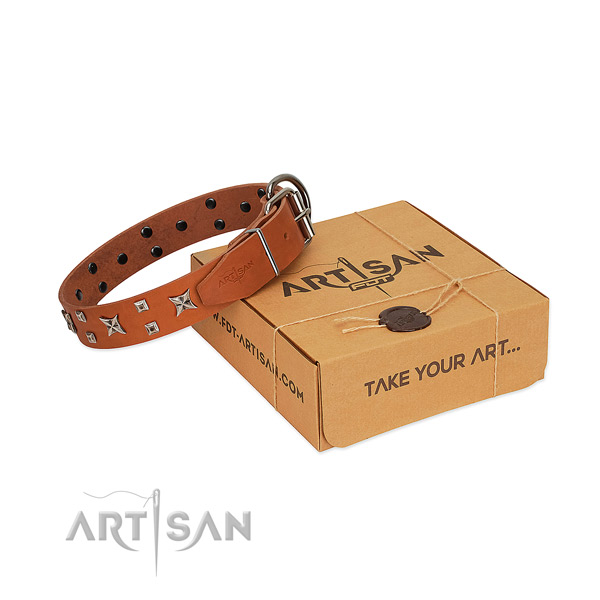 Quality leather dog collar with studs for everyday walking