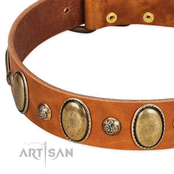 Natural leather dog collar with fashionable studs
