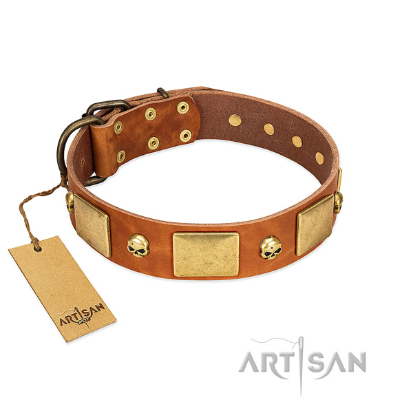 Top notch full grain leather dog collar with rust-proof embellishments